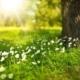 La ejecución de garantías económicas en proyectos fotovoltaicos